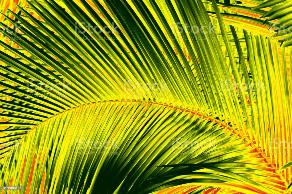 Abstract palmetto leaves in dramatic false colors from Florida. stock photo
