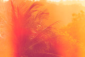 istock abstract palmtree background 1307966397