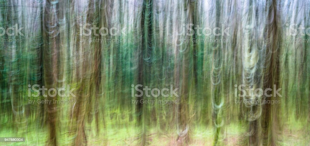 abstract panning view of forest in springtime green stock photo