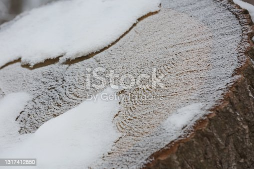 istock Abstract pattern detail of frozen trunk covered by snow 1317412850