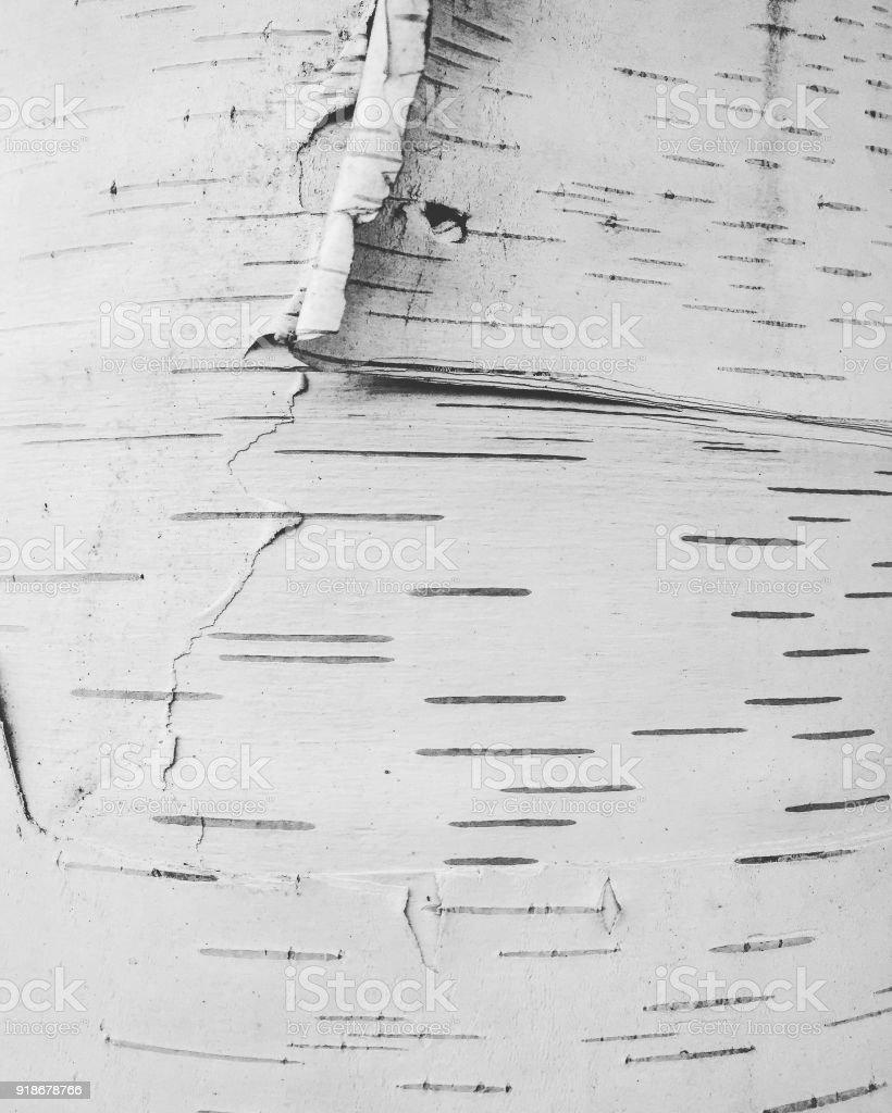 Abstrakt, abblätternde Rinde – Foto