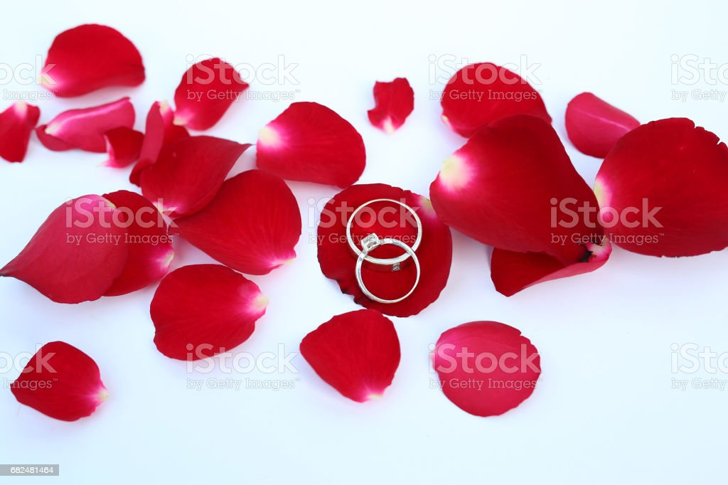 Abstract petals of red Rose with wedding rings on white background. foto stock royalty-free