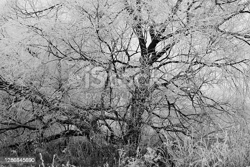 Abstract photo of a tree in winter for background