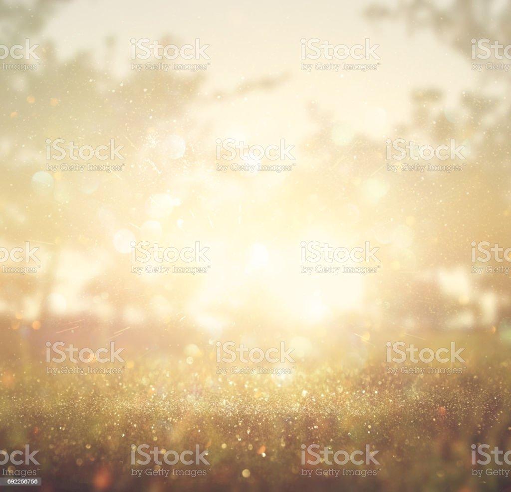 abstract photo of light burst among trees and glitter bokeh lights stock photo