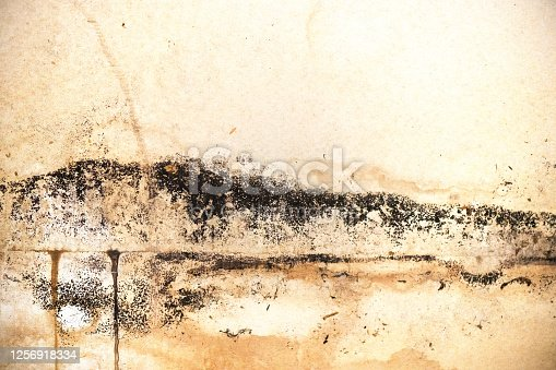 This is a close up photograph of black colored mold spores growing on the drywall of a demolished kitchen.