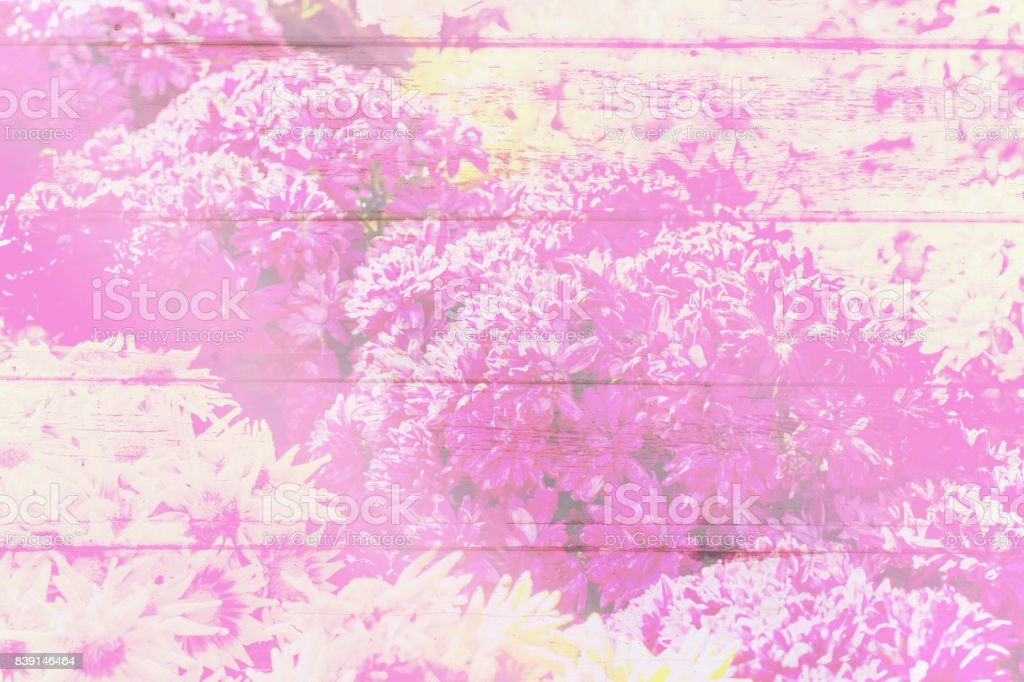 Abstract pink flower on wood wall stock photo
