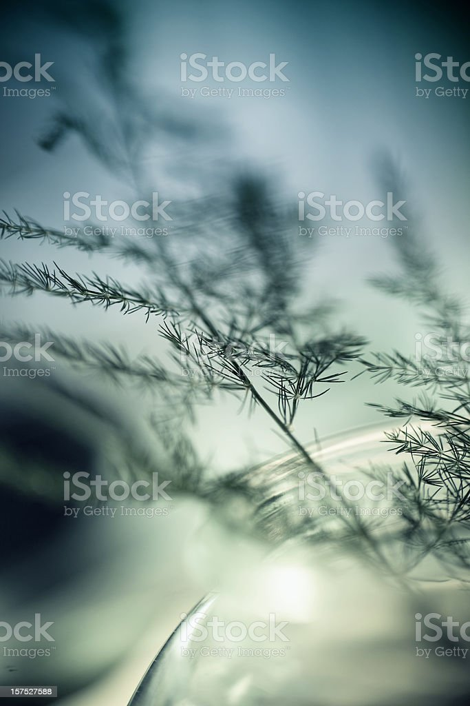 Abstract Plant in a Vase stock photo