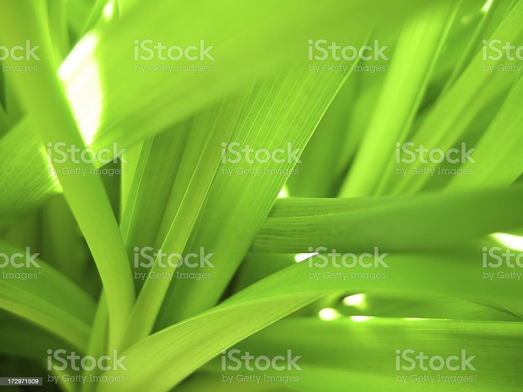 abstract plant royalty-free stock photo