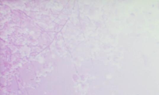 652288118 istock photo Abstract  purple  background 1067936236