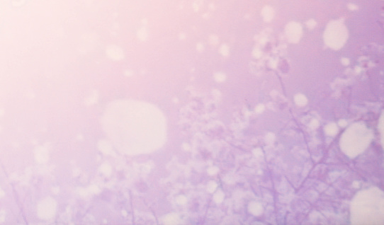 652288118 istock photo Abstract purple pink  background 1067936210