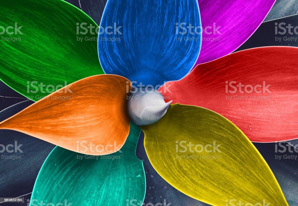 Abstract Rainbow flag on agave leaves stock photo