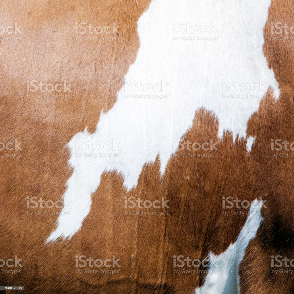cowhide with abstract brown and white pattern on side of cow