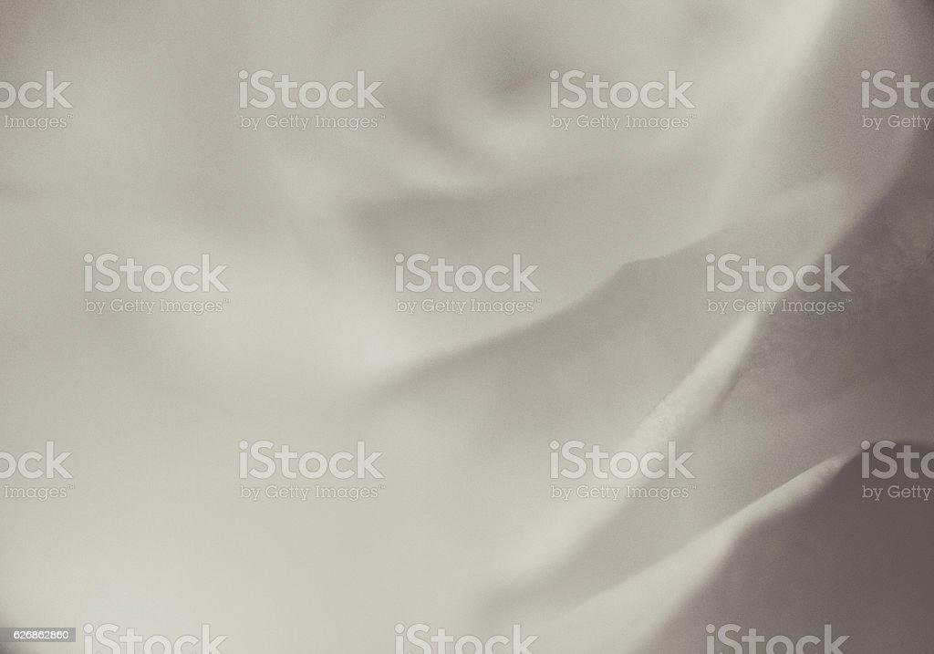 Abstract  Rose Background Black And White stock photo