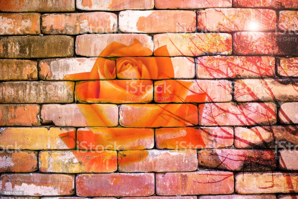 Abstract rose on the brick wallpaper in vintage style stock photo