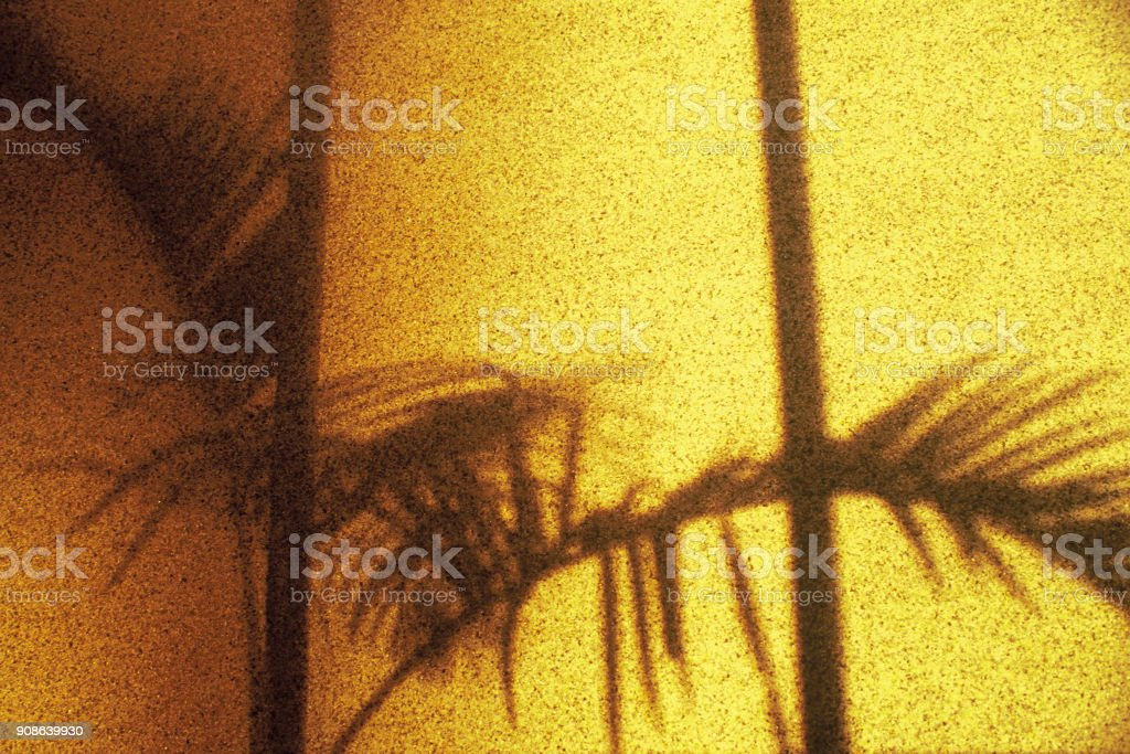 Abstract shadow of palm tree stock photo