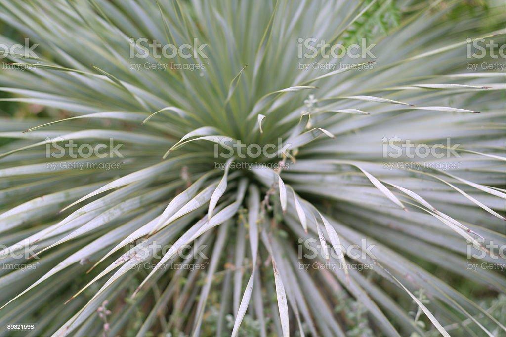 abstract shrub royalty-free stock photo