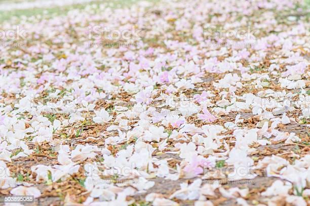 Abstract soft background pink flowers picture id503895088?b=1&k=6&m=503895088&s=612x612&h=q2ctflhdu7 6eh2rwe9 doavixbhhthkjqhqtg9ufce=