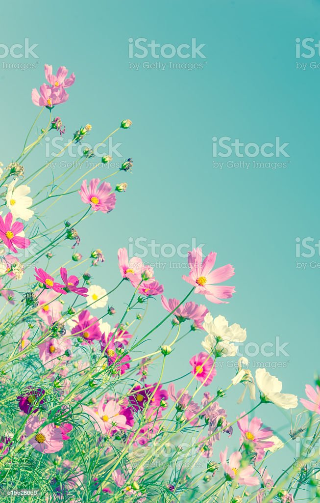 Abstract soft focus Cherry Blossom or Sakura flower on pastel stock photo