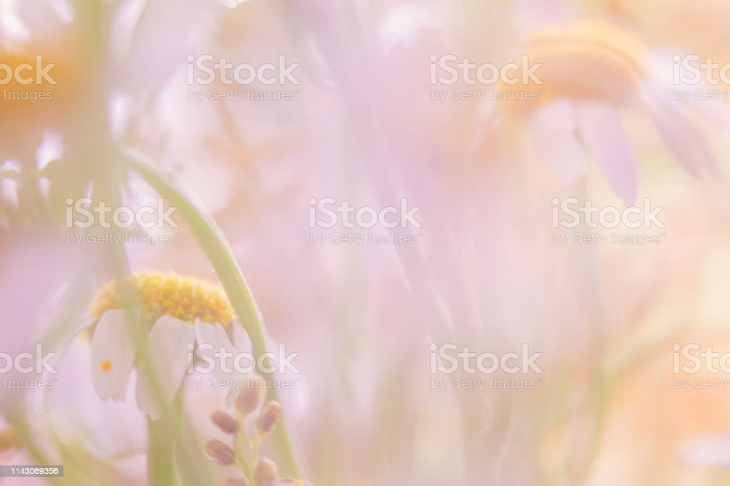 Abstract Soft Pastel Colored Daisy Flower Background With Copy Space Stock Photo Download Image Now Istock