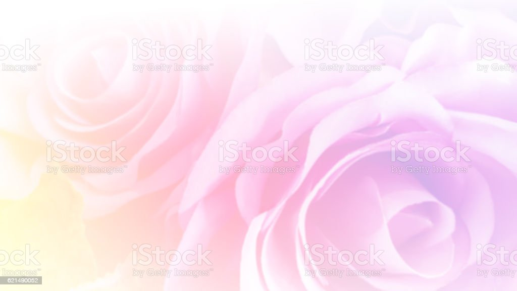 Abstract soft pastel roses with blurred color filter as background photo libre de droits