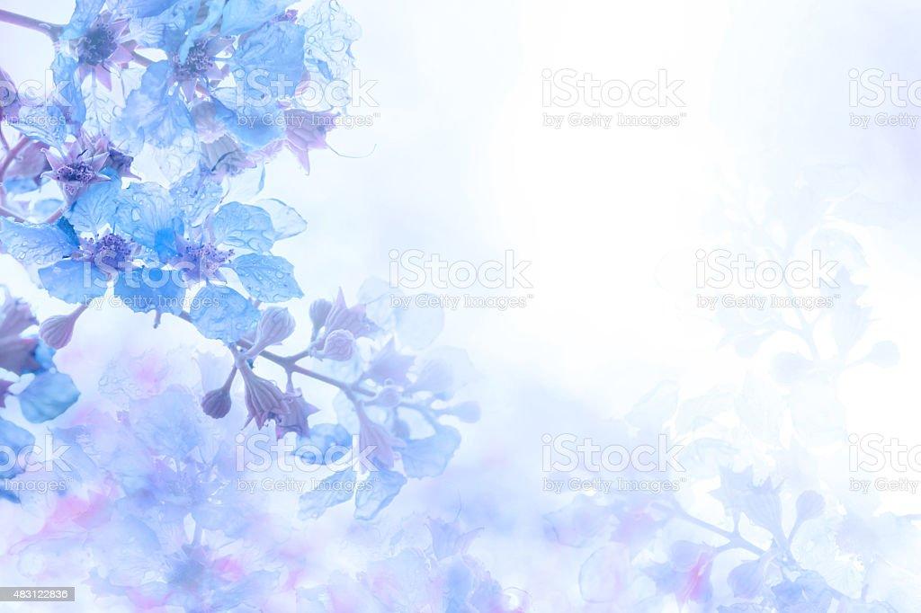 Цветочный  Фото большого размера и векторный клипарт