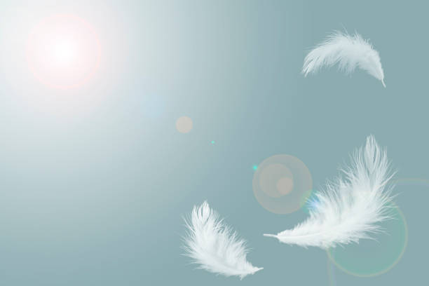 abstract solf white feathers floating in the air abstract solf white feathers floating in the air feather stock pictures, royalty-free photos & images