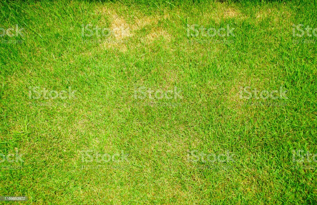 Abstract Space Ugly Worms Lawn Infestation Hosts Maintenance Grass