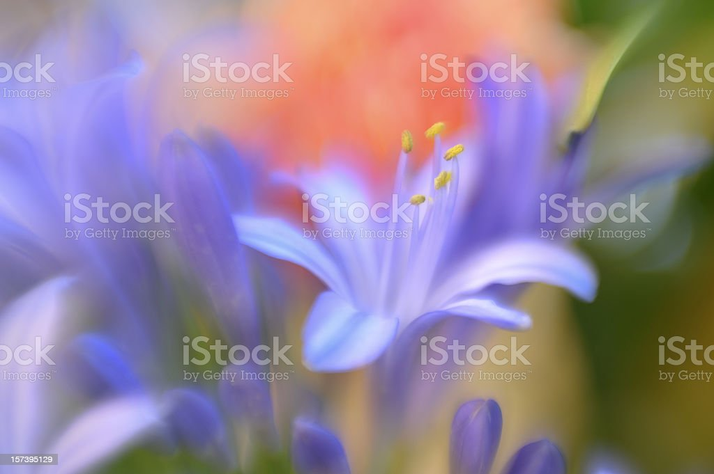 Abstract Spring Flowers Soft Focus stock photo