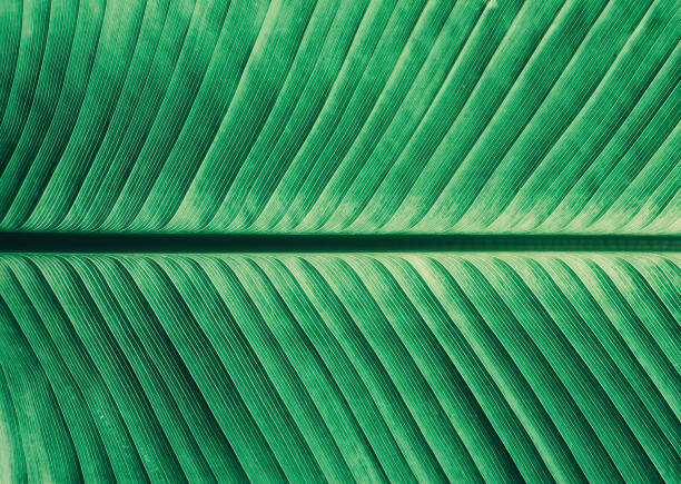 Abstract striped from nature green leaf stock photo