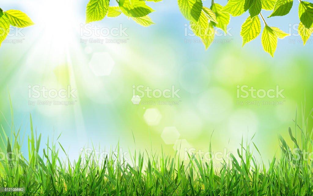 Abstracto fondo soleado de primavera foto de stock libre de derechos