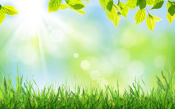 Abstracto fondo soleado de primavera - foto de stock