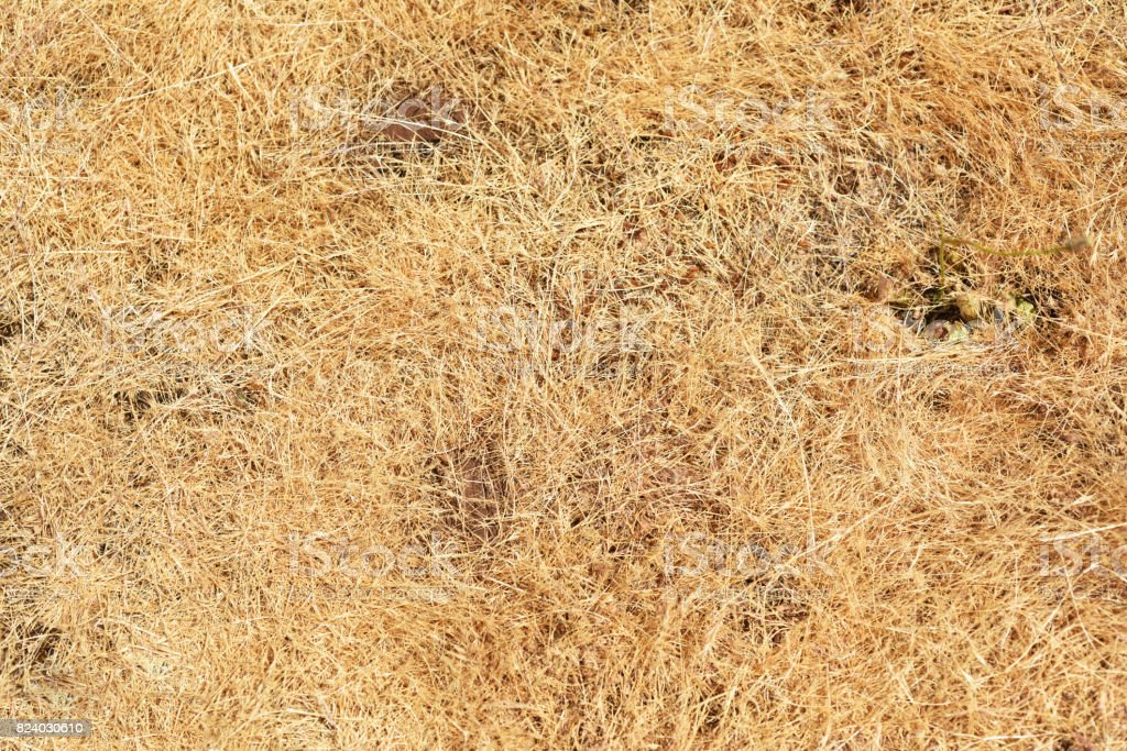 Abstract texture of dry grass. stock photo