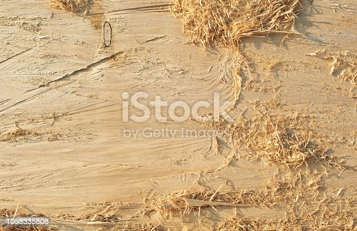 Abstract Texture Pattern Background of Wood of Natural Tree. Timber with shavings.