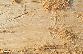 Abstract Texture Pattern Background of Wood of Natural Tree. Timber with shavings