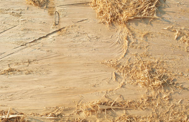 Abstract Texture Pattern Background of Wood of Natural Tree. Timber with shavings stock photo
