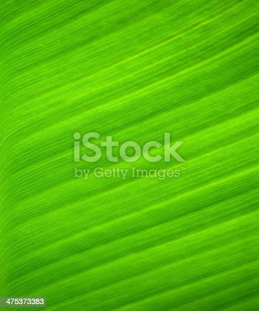 Abstract Texture Shown on Green Palm Leaf. Green Background.