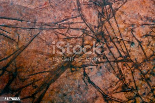 istock Abstract texture with structure of autumn leaves 181276663