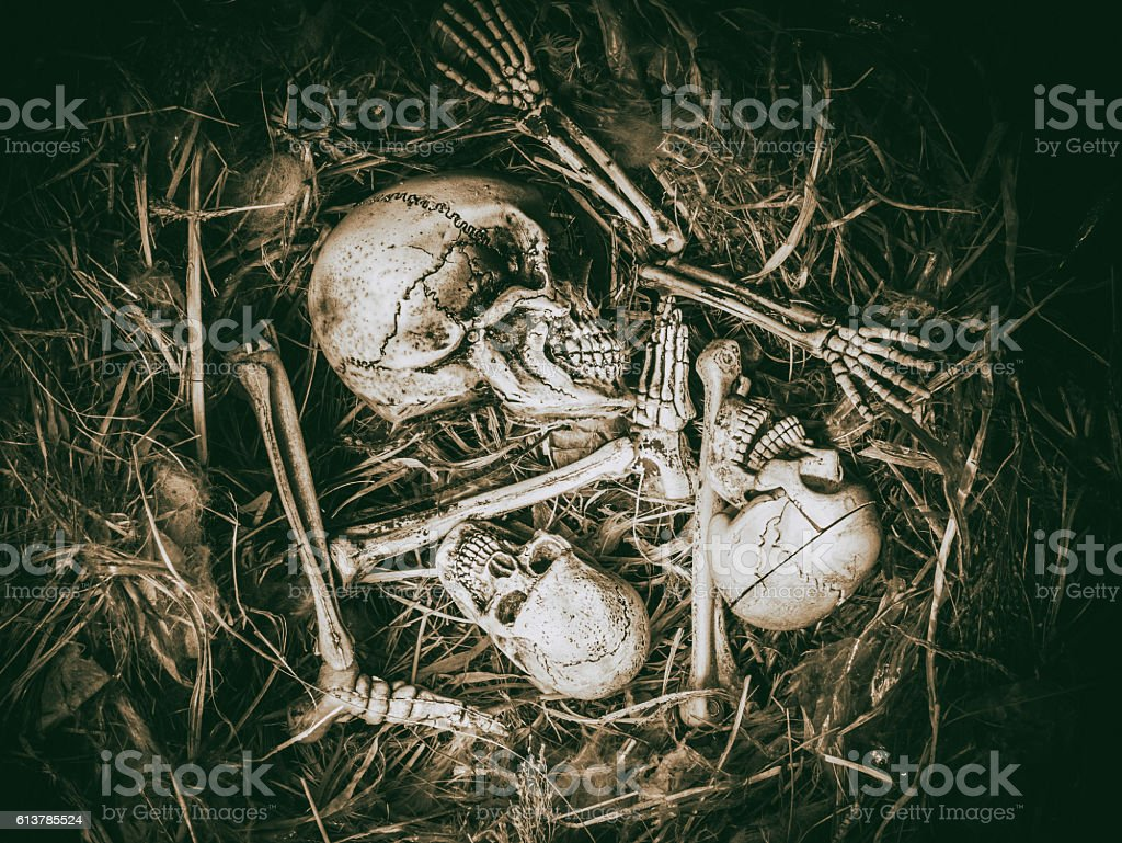 Abstract Three Skull Face In Abandoned Bird Nest Stock Photo More