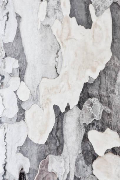 Abstract tree bark closeup. stock photo