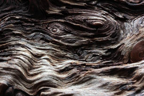 abstrakte baum textur - treibholz wandkunst stock-fotos und bilder