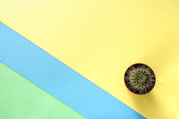 Abstract trendy color diagonal yellow-green-blue background with small cactus. stock photo