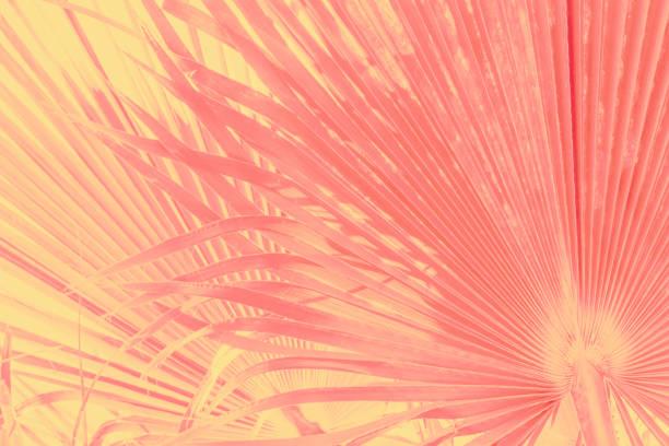 Abstrakter Tropengrausgrund. Große runde Palmenblätter in Vintage-Gradienten rosa gelb gefärbt verblassten Effekt. Warme Pastellfarbe Palette. Funky style. Sommerferien reisen Fernweh – Foto