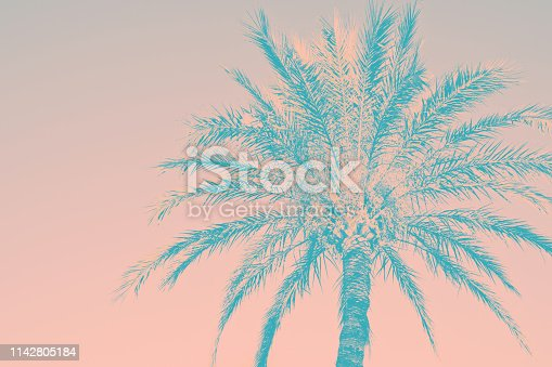Abstract tropical nature background. Silhouette of palm tree vintage pink teal toned faded grungy effect. Funky style. Poster beach pool party invitation. Product surface design