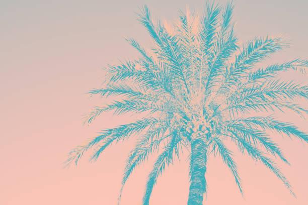 Abstrakter Tropengrausgrund. Silhouette aus Palmen-Vintage-rosa Teal getönt verblassten grungy Effekt. Funky style. Poster Beach Pool Party-Einladung Vorlage. Produktoberflächendesign – Foto