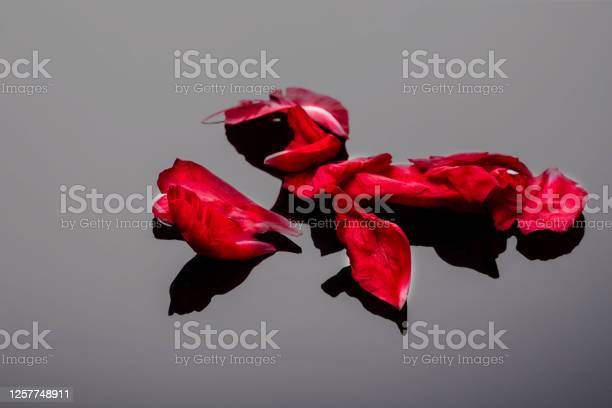 Abstract valentine background with falling red peony petals on black picture id1257748911?b=1&k=6&m=1257748911&s=612x612&h=sesofc9vidsemhmajy8mm8nepsuxyaaozf2vv2xo7so=