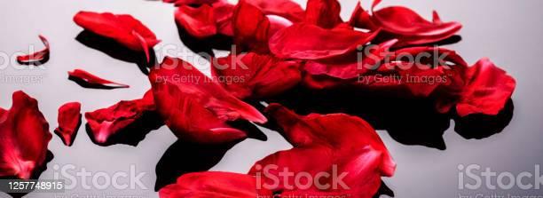 Abstract valentine background with falling red peony petals on black picture id1257748915?b=1&k=6&m=1257748915&s=612x612&h=uk gyt2fsni2bi4ogsrtwz50uepifcj7fq tftwviwg=