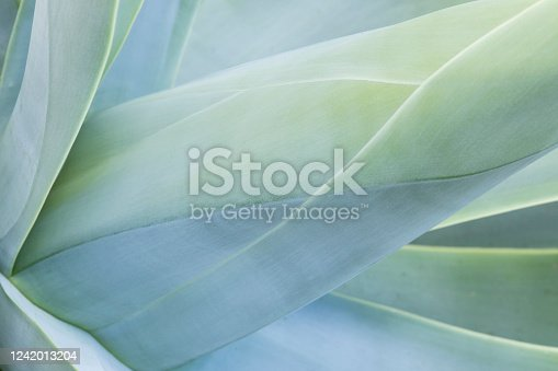 Abstract view of a succulent cactus plant showing shapes and lines in a blue tone