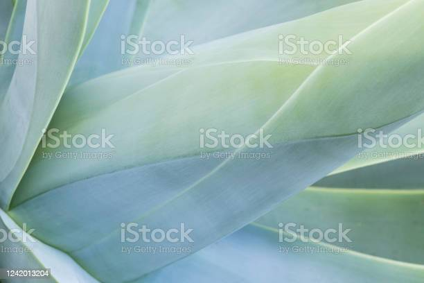 Photo of Abstract view of a succulent plant