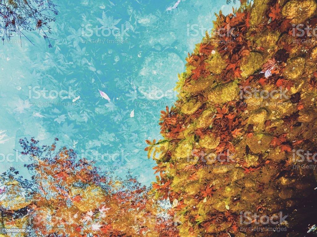 Abstrakte Wasserreflexion eines Baumes – Foto
