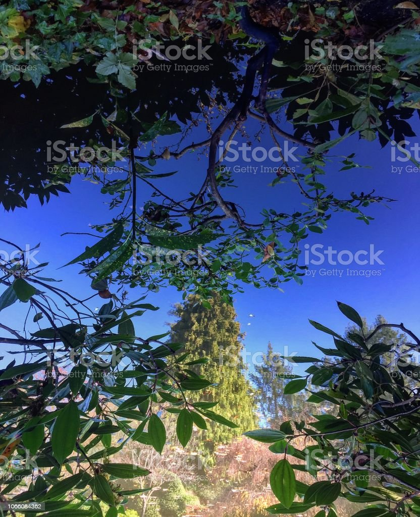 Abstrakte Wasserreflexion Baum – Foto